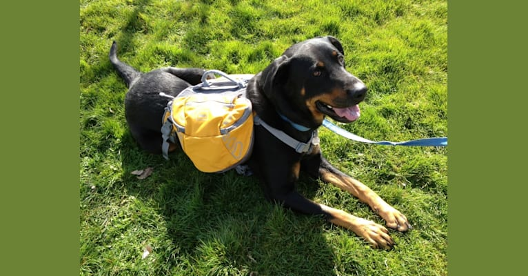 Photo of Prim (AKA #bestdogever), a Rottweiler and Labrador Retriever mix in Seattle, Washington, USA