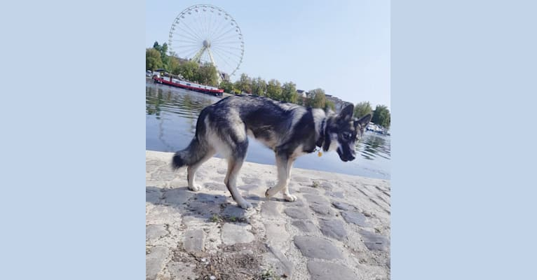 Photo of Rajah, a   in France