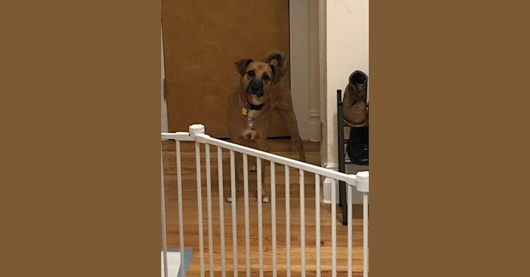 Photo of Ellie Danvers, an American Village Dog  in North Shore Animal League America, Davis Avenue, Port Washington, NY, USA