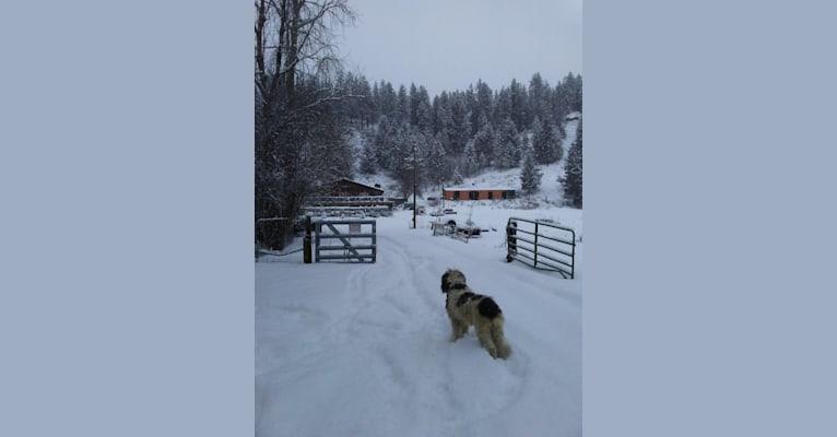 Photo of IRONHORSE -L.P.F. ENZO, a Poodle (Standard)  in Newman Lake, Washington, USA