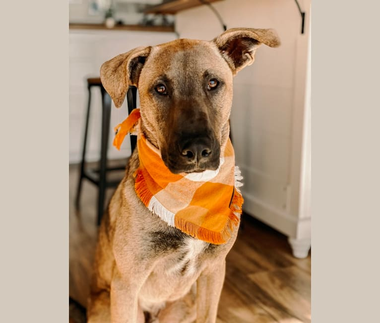 Photo of Jones, a Labrador Retriever, German Shepherd Dog, Chow Chow, American Pit Bull Terrier, Golden Retriever, and Mixed mix in San Diego, California, USA