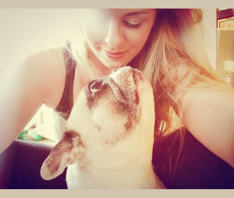 Photo of Sasha, a French Bulldog  in California, USA