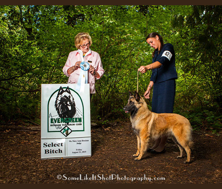 Photo of Tuarie, a Belgian Shepherd  in Poulsbo, WA, USA
