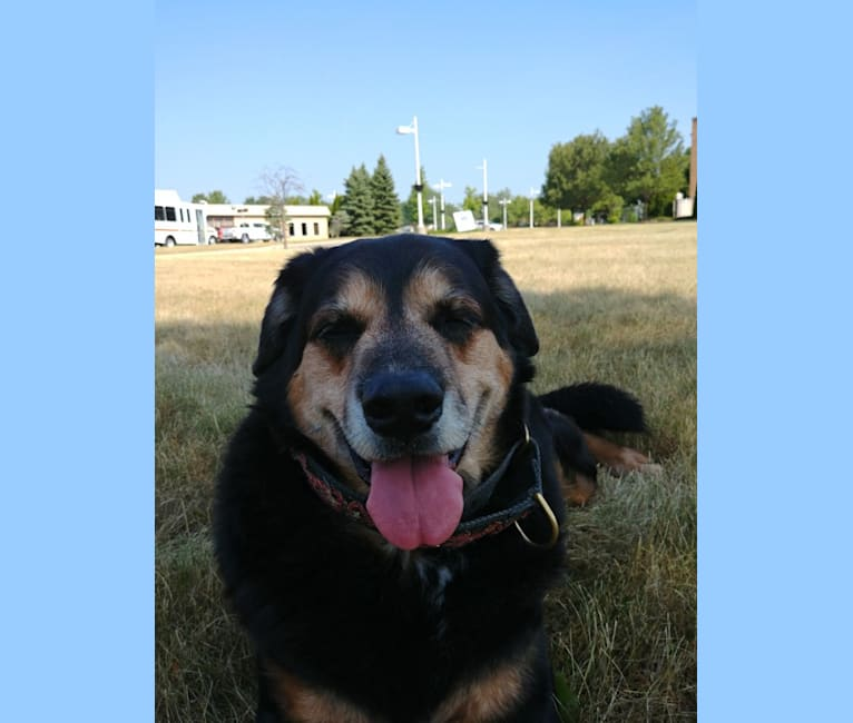 Photo of Keiser, an American Pit Bull Terrier, Labrador Retriever, Chow Chow, Siberian Husky, German Shepherd Dog, and Mixed mix in Columbus, Ohio, USA