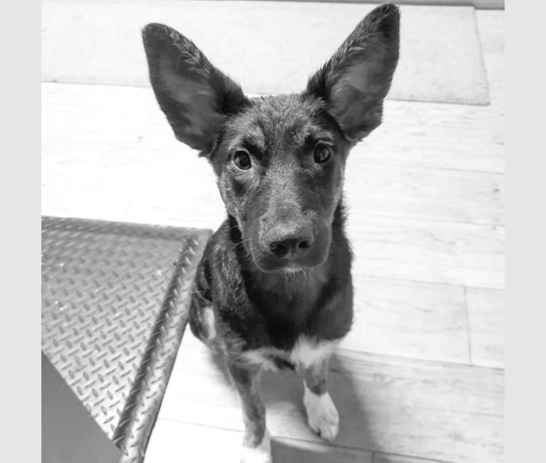 Photo of Maggie, an European Village Dog mix in Catania, Sicily, Italy