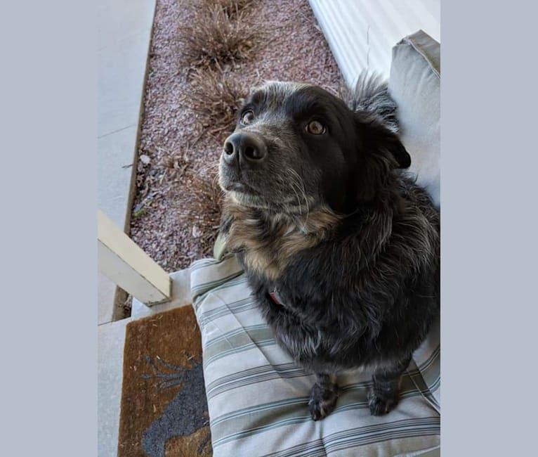 Photo of Odin 'stinky butt' Mussatti, an Australian Cattle Dog  in Wisconsin, USA