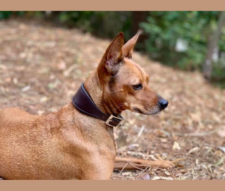 Photo of Phoebe, an European Village Dog and Miniature Pinscher mix in Abruzzo, Italia