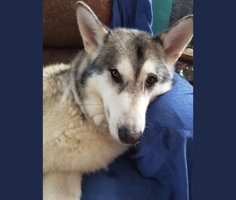 Photo of Kenobi, a   in South Dakota, USA