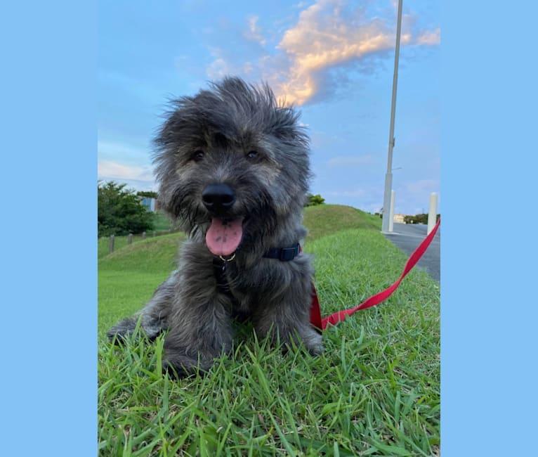 Photo of Sebastian, a Japanese and Korean Village Dog  in Okinawa, Japan