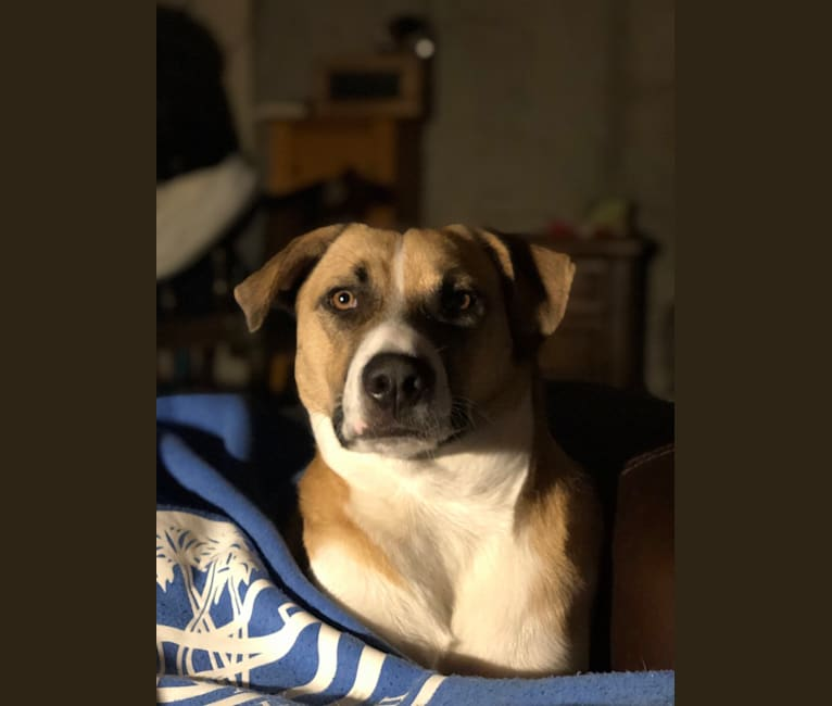 Photo of Piper, an American Village Dog  in Aruba
