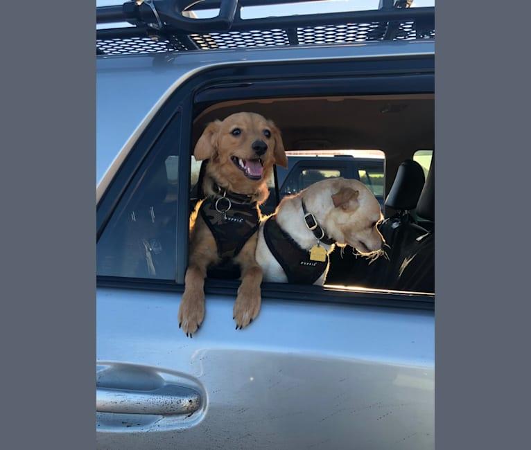 Photo of Milo, a Poodle (Small), Chihuahua, Pomeranian, and Mixed mix in Phoenix, Arizona, USA