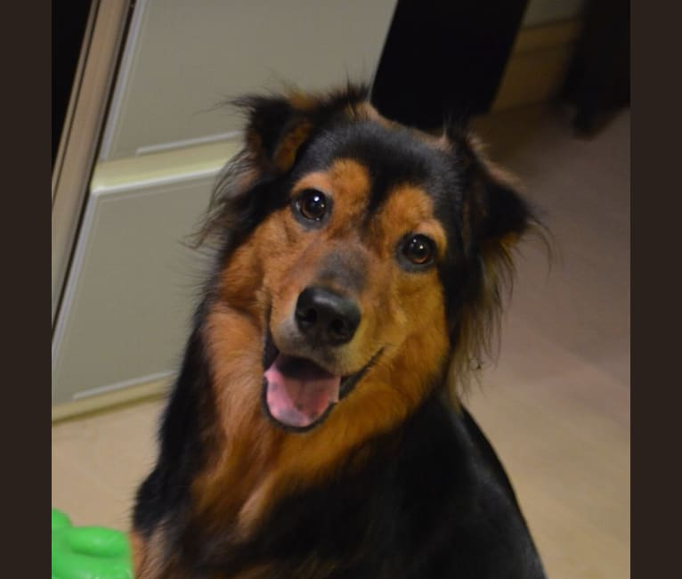 Photo of Sparkie, an East Asian Village Dog  in 香港, 香港