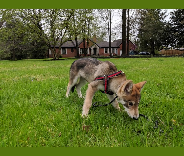 Photo of Kurne, a   in London, KY, USA