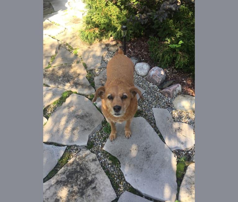 Photo of Riley, a Doberman Pinscher, Chow Chow, Beagle, Mountain Cur, Cocker Spaniel, and American Eskimo Dog mix in Ferndale, Michigan, USA