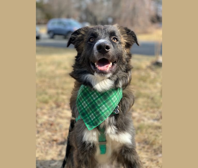 Photo of Miles, a Great Pyrenees and German Shepherd Dog mix in Mississippi, USA