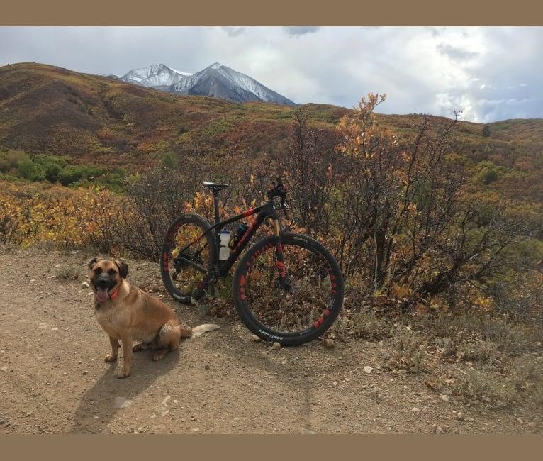 Photo of Duke, a German Shepherd Dog, Australian Cattle Dog, Beagle, American Pit Bull Terrier, and Mixed mix in Aspen Animal Shelter, Animal Shelter Road, Aspen, CO, USA