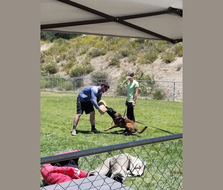 Photo of Mauser, a Belgian Shepherd  in San Ysidro, San Diego, CA, USA