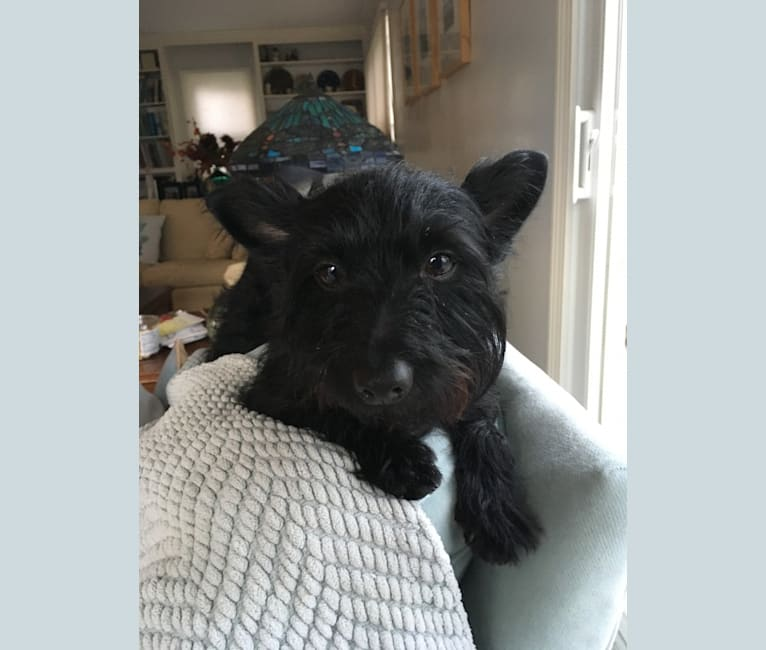 Photo of Murph, a Pomeranian, Dachshund, Yorkshire Terrier, and Chihuahua mix in Arkansas, USA