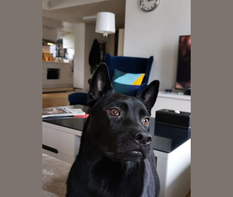 Photo of LuLu, an East Asian Village Dog  in Hong Kong Island, Hong Kong