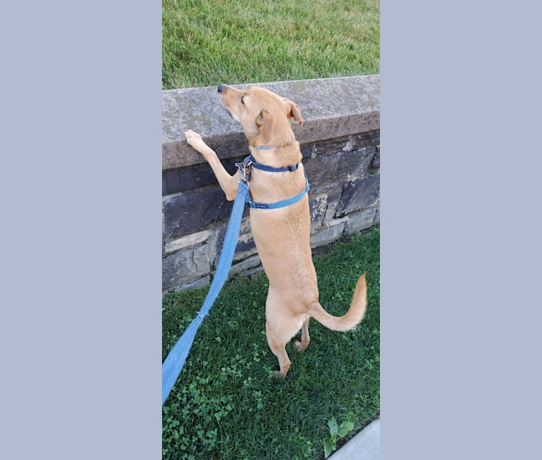 Photo of Maggie Mae, a Mountain Cur, Russell-type Terrier, Labrador Retriever, and Mixed mix in Athens, Tennessee, USA