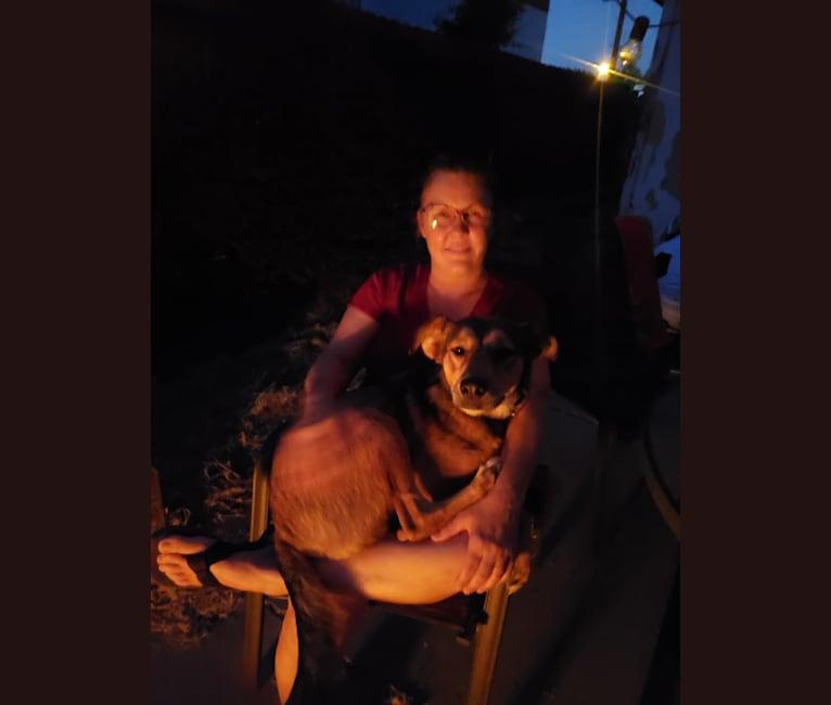 Photo of Sheppy, an American Pit Bull Terrier, German Shepherd Dog, Cocker Spaniel, and Mixed mix in Tijuana, Baja California, Mexico