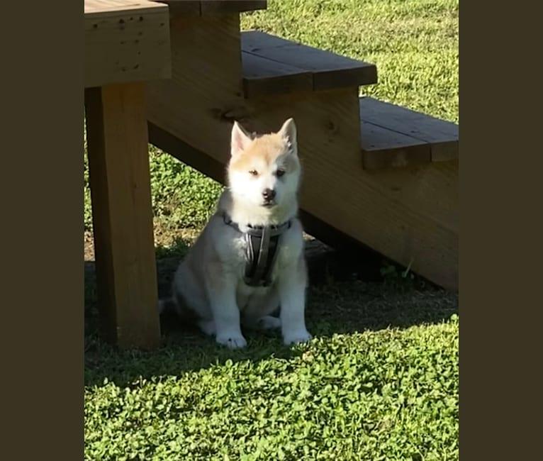 Photo of Echo, a   in Krebs, OK, USA