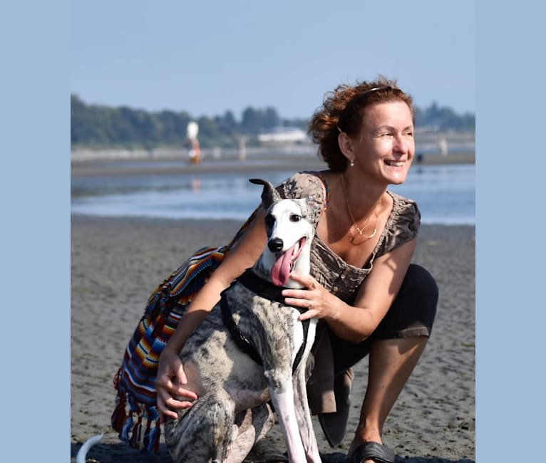 Photo of Jegs, a Whippet  in TX, USA