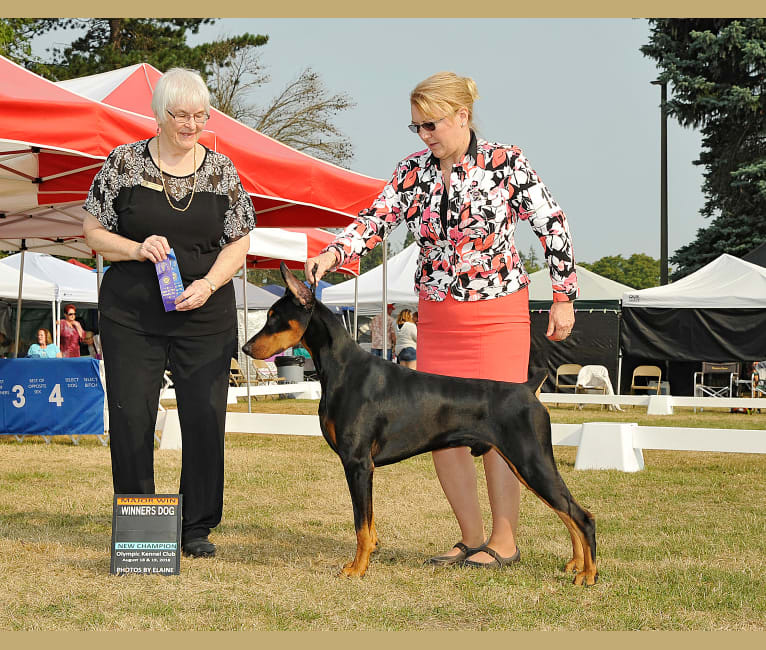 Photo of Miles, a Doberman Pinscher  in Stevensville, Montana, USA
