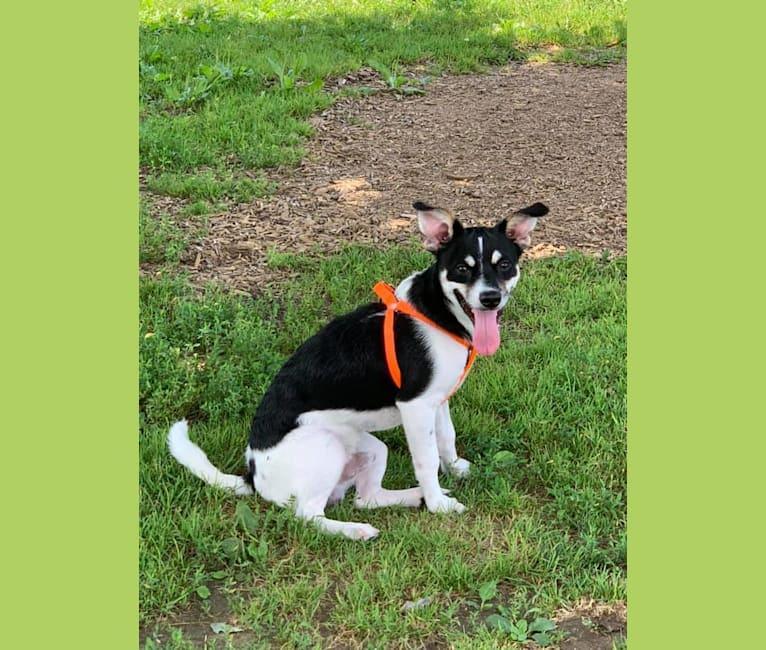 Photo of Bubba Looo, a Chihuahua, Pomeranian, Shih Tzu, and Lhasa Apso mix in Cincinnati, Ohio, USA