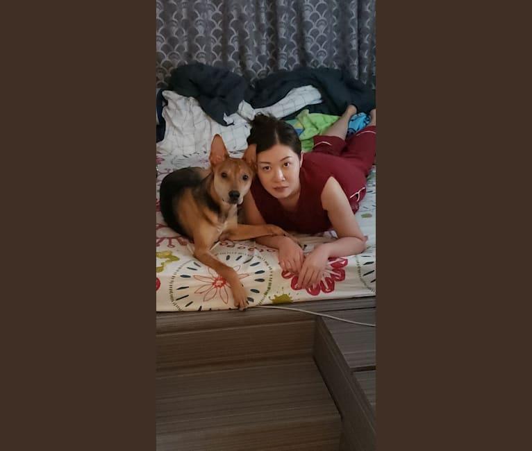 Photo of Picky, an East Asian Village Dog  in Hong Kong, Hong Kong