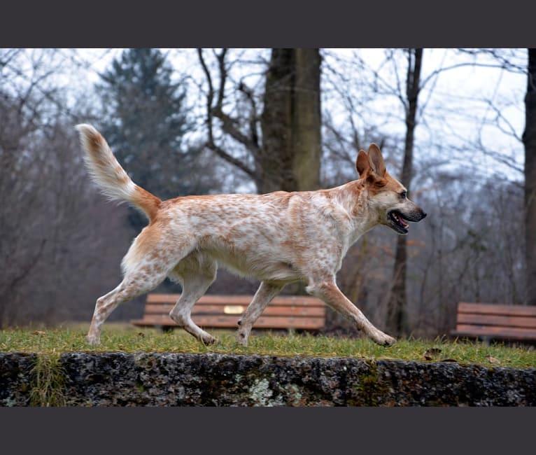 Photo of Juni, an European Village Dog  in Italien