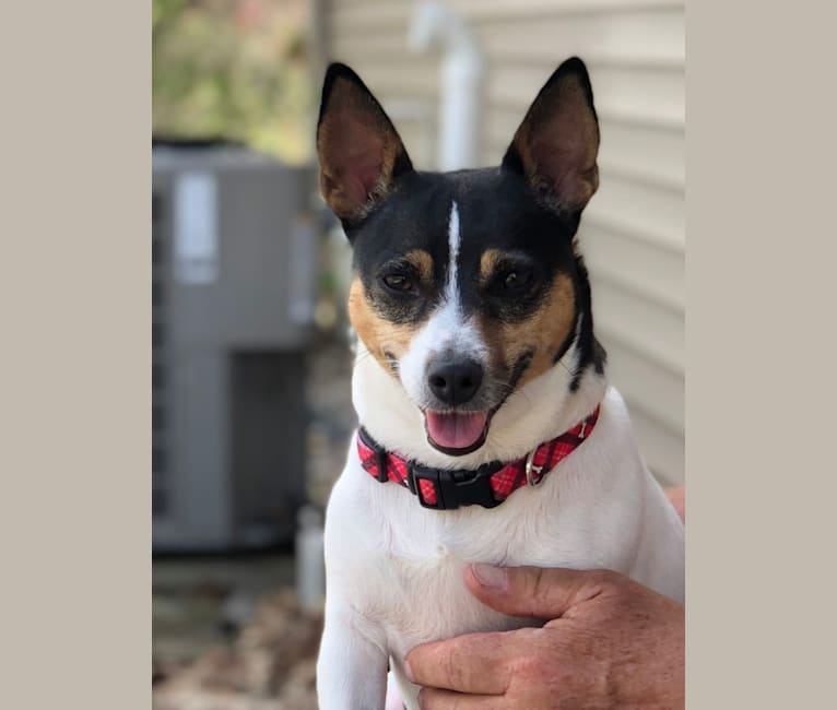 Photo of Josie, a Teddy Roosevelt Terrier  in Euharlee, GA, USA