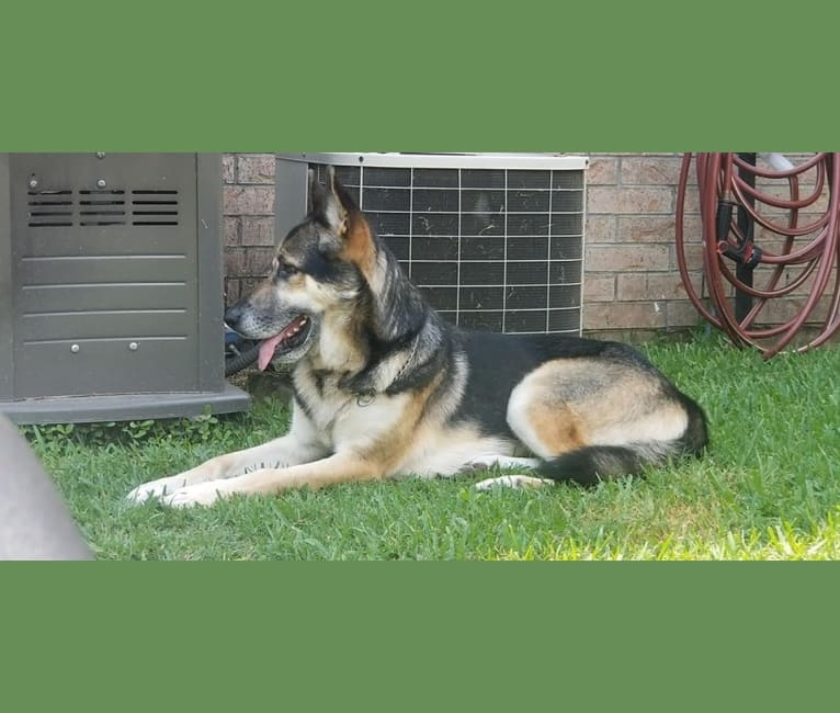 Photo of Odin, a   in Port Arthur, Texas, USA