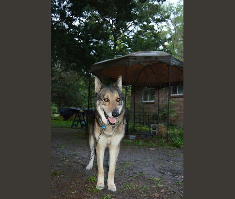 Photo of Timber, a   in Gainesville, Florida, USA