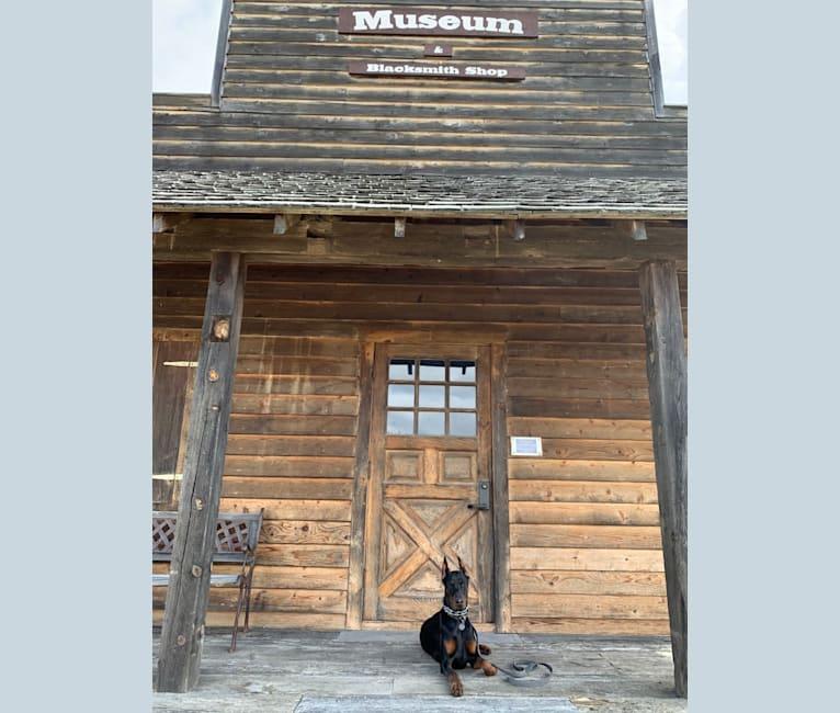 Photo of Nhagavendra (Nhaga), a Doberman Pinscher  in Georgia, USA