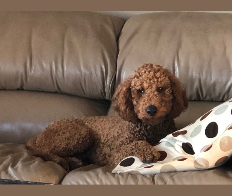 Embark Dog Dna Test Breed