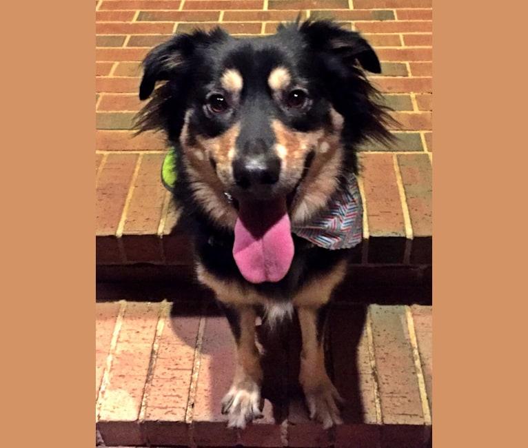 Photo of Eli, a Labrador Retriever, Great Pyrenees, Boxer, Border Collie, and Mixed mix in Norman, Oklahoma, USA