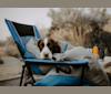 Photo of Denver, an English Springer Spaniel  in Bethel Island, CA, USA