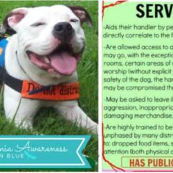 'PR' Ezekiel Kidon OGK Chociej DNA-P {Service Dog}