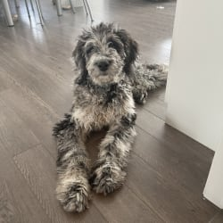 Juno Thedoodle