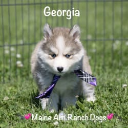 Miss Maine Aim Georgia