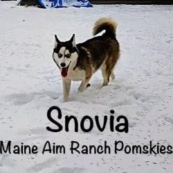 Miss Maine Aim Snovia