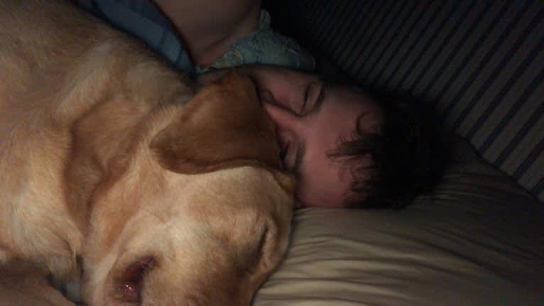 Photo of Eli, a Labrador Retriever  in Philadelphia, Pennsylvania, USA