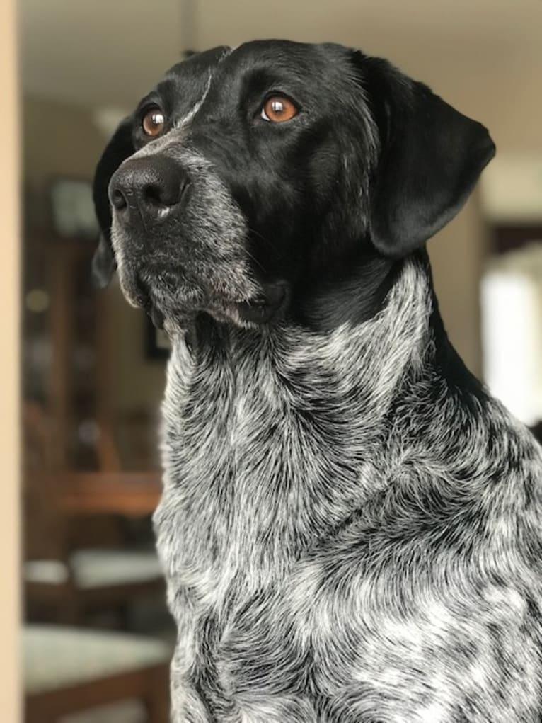 Photo of Aspen, a Labrador Retriever, German Shepherd Dog, American Pit Bull Terrier, American English Coonhound, Golden Retriever, and Mixed mix in Kelowna, British Columbia, Canada