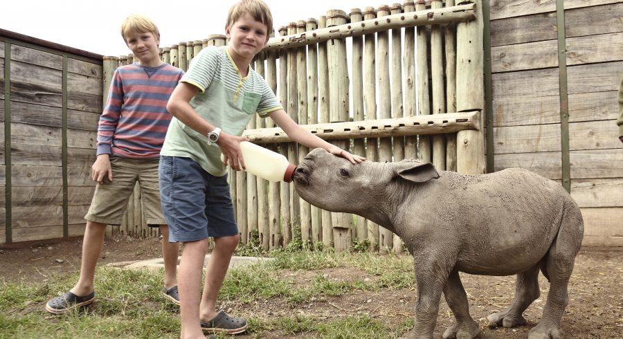 Children on a safari - Feeding baby rhinos