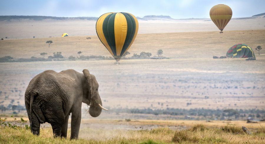 Enchanting Travels African elephant , foggy morning, hot air balloons landing on background, Masai Mara National Reserve