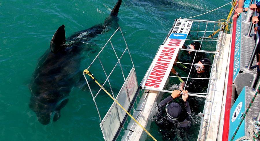 Enchanting Travels - South Afria Tours - Overberg - Birkenhead House - Shark diving 2