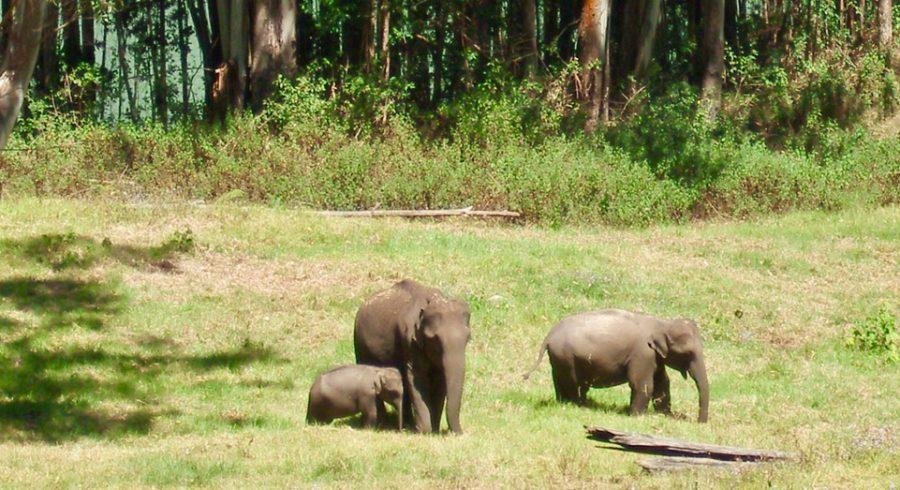 Groups of Elephant
