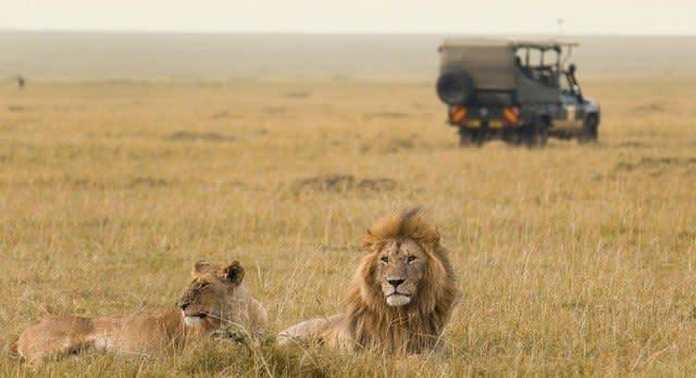Beim Safari-Fahrt Tiere in Kenia beobachten.