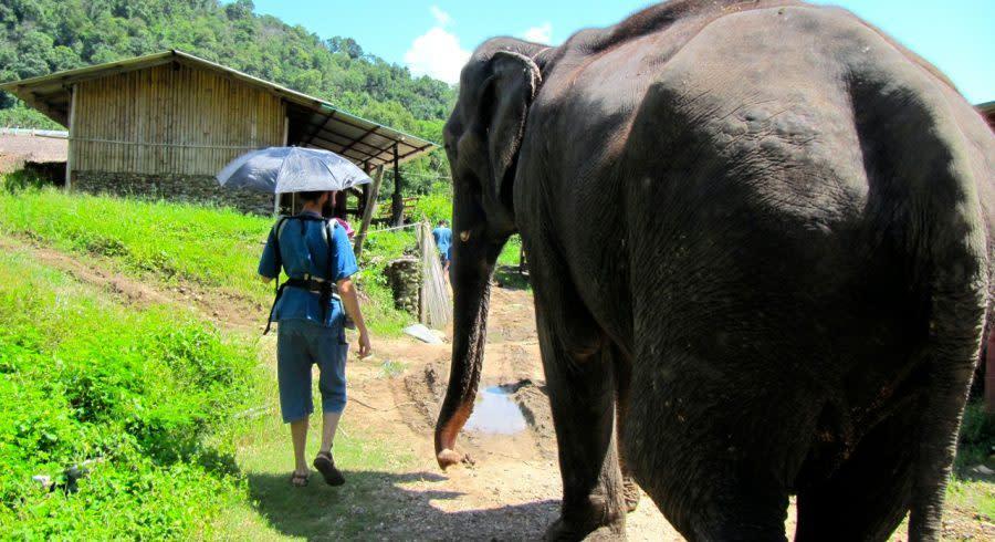 Das Tung-La-Korn Elephant Rescue Center in Chiang Mai